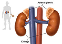 Adrenal Glands Cancer Treatment India